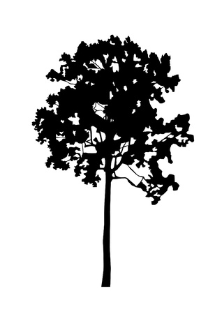 coppice: tree, black silhouette on white background  Vector