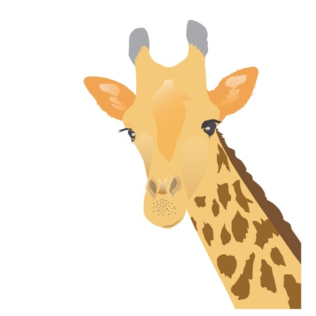 Giraffe - vector illustration  Vector