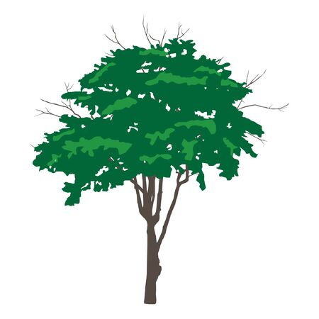 Tree, vector illustration