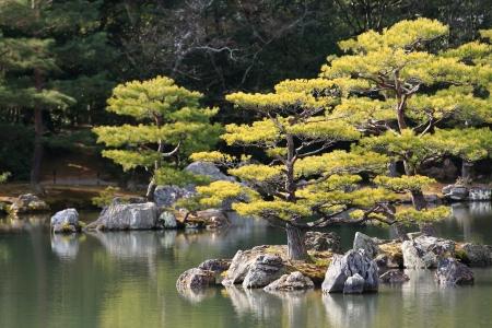 Kyoto, Japan - Japanese garden at famous Kinkakuji (Kinkaku-ji)