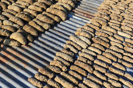 sea cucumber: Drying Sea Cucumber Outdoor Under Strong Sunlight