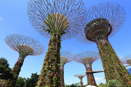 hectares: SINGAPORE-May 11: Day view of The Supertrees Grove at Gardens by the Bay on MAY 11, 2014 in Singapore. Spanning 101 hectares, and five-minute walk from Bayfront MRT Station