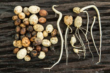 germination: germinaci�n de las semillas Foto de archivo