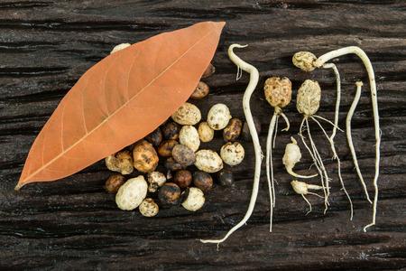 unfold: seed germination Stock Photo