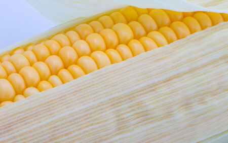 Grains of ripe corn macro image photo
