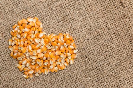 Dried raw corn kernels heart  border on burlap background photo