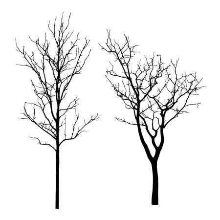 Vecteur silhouette noire d'un arbre nu Banque d'images - 31148866