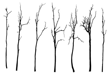 branch: vector black silhouette of a bare tree Illustration