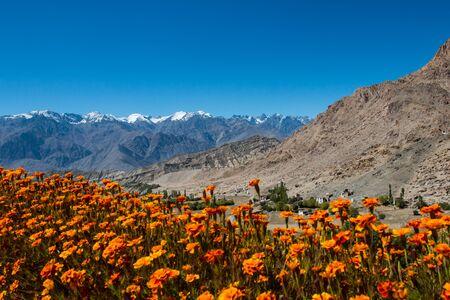 Snow mountain range, Leh Ladakh, India photo