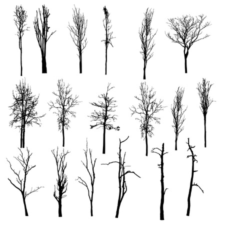 trunks: vector black silhouette of a bare tree Illustration