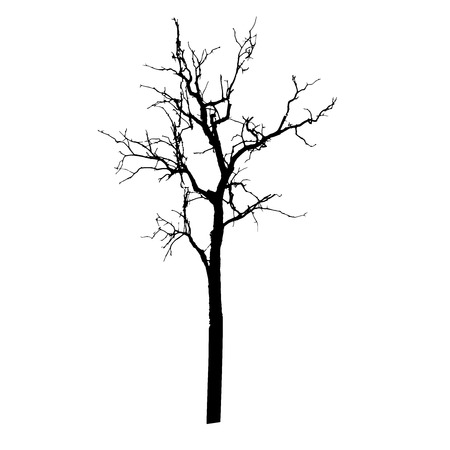 bare tree: vector black silhouette of a bare tree Illustration