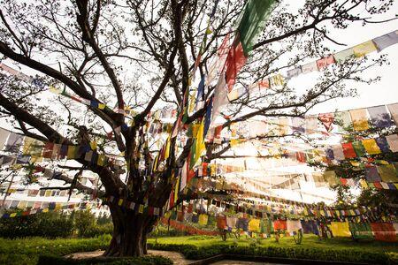 holiest: Buddhist praying flags in Lumbibi, Nepal