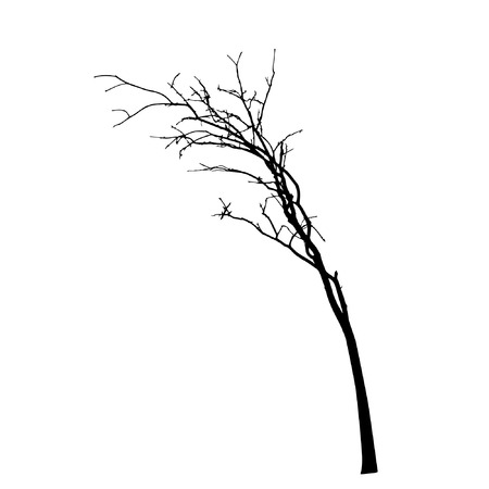 autumn trees: vector black silhouette of a bare tree Illustration