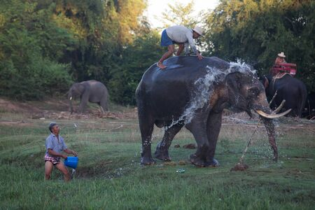 surin: SURIN, THAILAND - November 21: Mahout ride an elephant and take a bath elephant in the river for prepare to show in Amazing Surin Elephant Festival 55th: November 21, 2015 in SURIN, THAILAND. Editorial