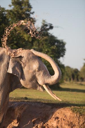Elephant Prendendo Bagno Di Fango Foto Royalty Free, Immagini ...