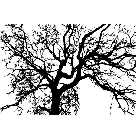 vecteur silhouette noire d'un arbre nu