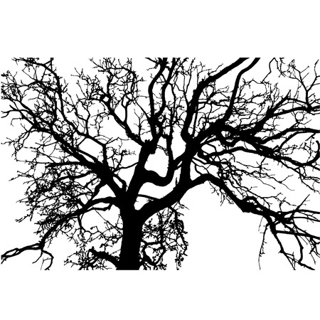 vector black silhouette of a bare tree Vectores