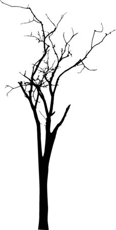 Dead Tree without Leaves Vector Vectores