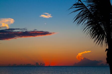 Colorful sunset in Mexico, holbox island with palm tree in front
