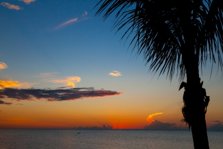 Colorful sunset in Mexico, holbox island with palm tree in front photo