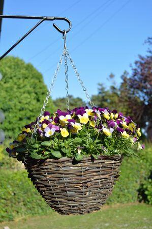 Hanging Basket Full of Pansies