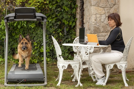 woman working at a computer while your dog is trained on the treadmill Stock Photo