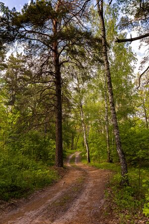 beautiful forest road and green trees and grass in the forest at sunset time. vertical orientated image. Stok Fotoğraf