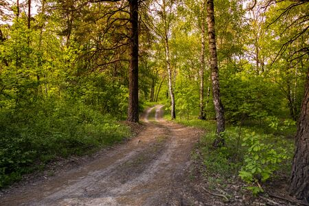 beautiful forest road and green trees and grass in the forest at sunset time. Stok Fotoğraf