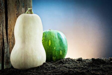 various pumpkin in the earth  photo