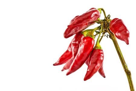 cayenne: Red hot chili pepper isolated on white