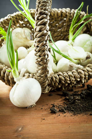 white onions  in wood basket  photo