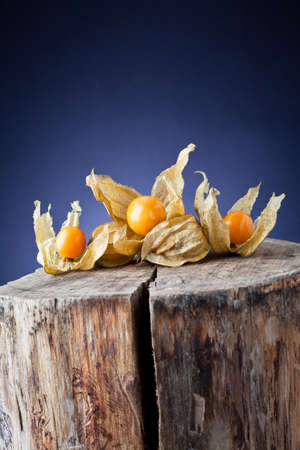 ligh: physalis on tree trunk and background ligh Stock Photo