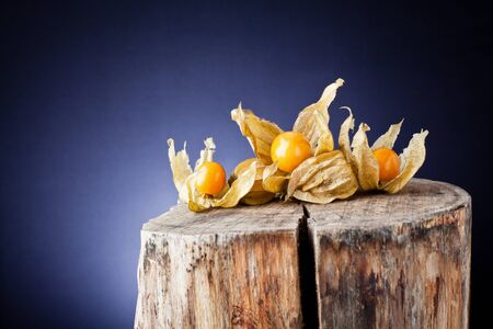 husk tomato: physalis on tree trunk and background ligh Stock Photo