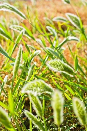 green vegetation: green vegetation in an area of land in the summer