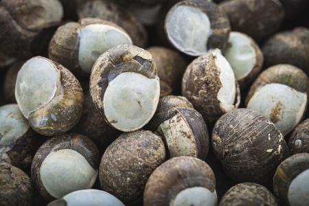 breeding ground: land snails