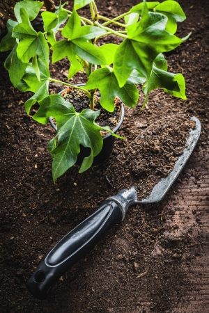 garden tool: small potted seedling