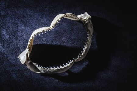 Shark jaw with teeth photo