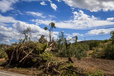 windstorm: windstorm in the countryside