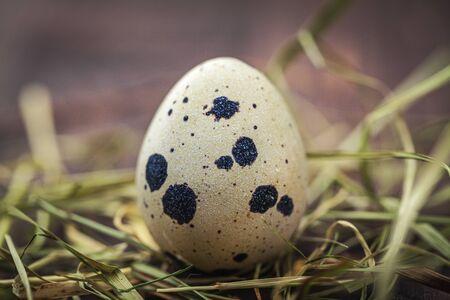 huevos de codorniz: pequeños huevos de codorniz manchado de madera con mechones de hierba Foto de archivo