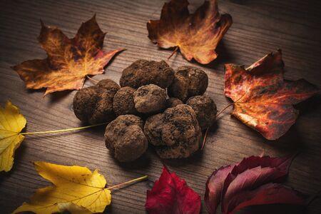 truffle: black truffle mushroom