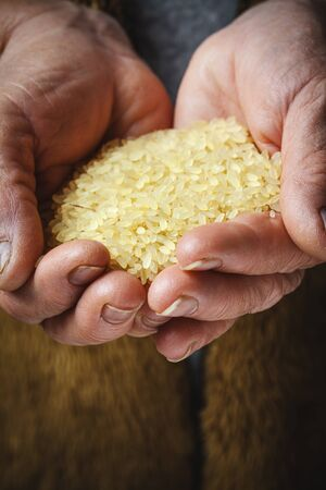 brown rice in old hands