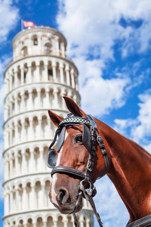 Horse and leaning tower of Pisa .Tuscany, Italy Standard-Bild