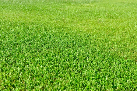A fresh natural grass field, low depth of field, focus on the middle of the frame photo