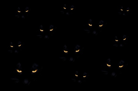 Group of black evil cats in the dark photo