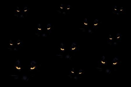 Group of black evil cats in the dark