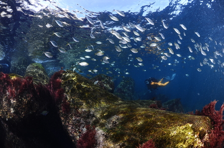 Underwater model Banco de Imagens