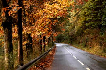 road Stock Photo - 263143
