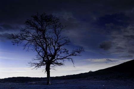 tree Stock Photo - 263068