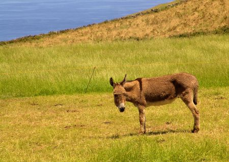 donkey in the field photo
