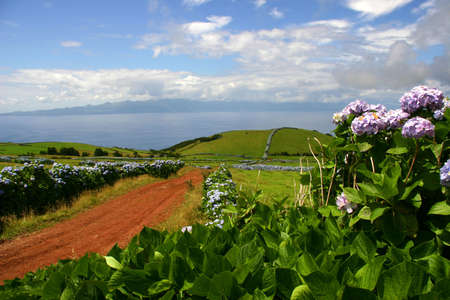 azores flowers photo